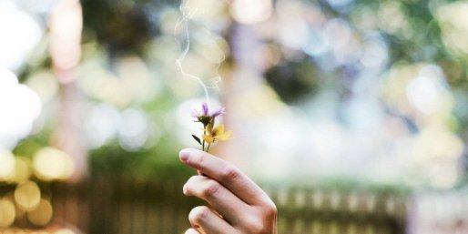 flowers-burn-let-go-smoke